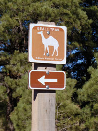 Camels blazed this trail at the Kaibab National Forest.