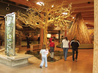 The Turtle Bay Museum features a variety of permanent and touring exhibits.