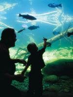 Turtle Bay Aquarium.