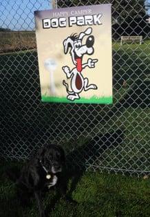 Cal Expo Dog Park