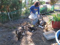 René Agredano finds work at an animal rescue center in North Carolina.