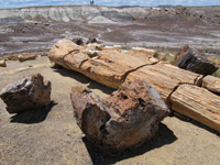 The Crystal Forest offers good examples of petrified wood.