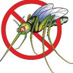 Block the Mosquito Misery with Natural Solutions