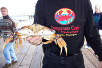 person holding dungeness crab