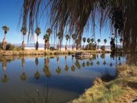 Palm trees border Lake Tuendae at Mojave National Preserve.
