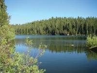 Lush forest surrounds Sunflower Lake.