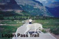 b2ap3_thumbnail_034-Mountain-goat-crossing-Logan-Pass-Trail-Glacier-NP-copy.jpg