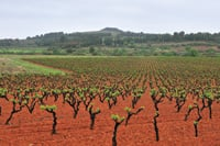 Vineyards abound in the Corbières region of southern France.