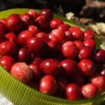 5 Herbs, Seeds and Berries Every Woman Should Get to Know