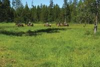 Horse trails meander through Harriman State Park.
