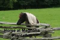 b2ap3_thumbnail_ARLINEHorse-on-Magnolia-Plantation-copy.jpg