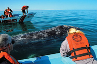 You might touch a whale during a Malarrimo whale watching tour.