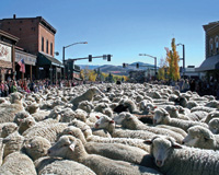 Main Street in Ketchum is filled with wool during Trailing of the Sheep.