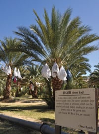 Visitors can learn about dates while wandering through the China Ranch groves.