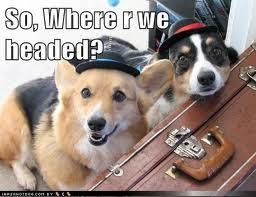 dogs_20131208-171244_1.jpg