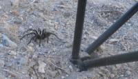 b2ap3_thumbnail_Year-of-the-Spider.jpg
