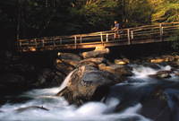The West Prong of the Little Pigeon River flows in the Great Smoky Mountains.