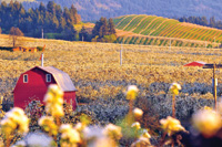 A three-week festival celebrates blossom time in Hood River Valley.