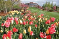 Visitors will see acres of tulips at Thanksgiving Point Gardens.