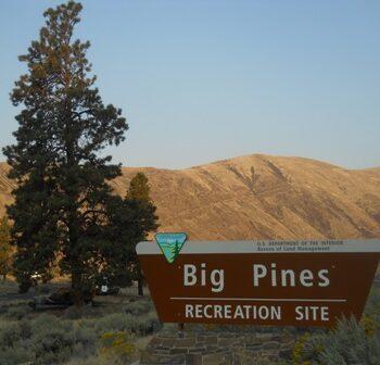 Big-Pines.jpg