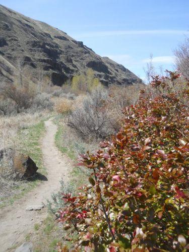 Umtanum-Trail.jpg