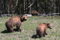 b2ap3_thumbnail_ARLINEThree-Bears.jpg
