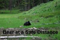 b2ap3_thumbnail_ARLINEBlack-Bear-at-a-safe-distance.jpg