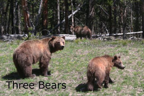 ARLINEThree-Bears-Yellowstone-NP-resized.jpg