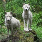 Great Escapes: Northwest Trek Wildlife Park