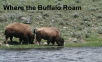b2ap3_thumbnail_ARLINEWhere-Buffalo-Roam.jpg
