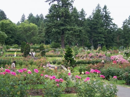 Roses In Garden: Great Escapes: International Rose Test Gardens In Portland