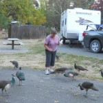 Adventures in RVing: The Birds!