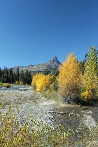 ARLINE-Aspens-and-Pilots-Peak-Beartooth-Highway.jpg