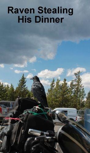 ARLINE-Raven-copy.jpg