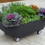Start a Small Garden to Take RVing