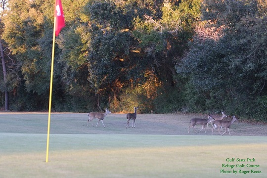 Gulf State Park Golf Course