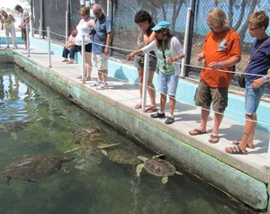 sea turtle rehab