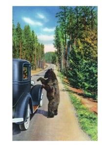 Famous Poster of a Bear Begging Frood from Visitors in a Model T