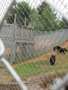 Oswald's Bear Ranch habitat