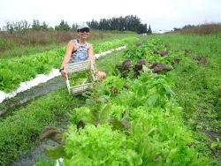 organic farm workamping