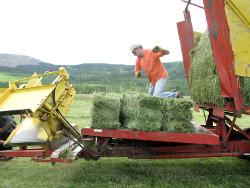 Ranch job workamping