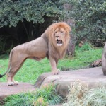 Visit the Free Lincoln Park Zoo in Downtown Chicago