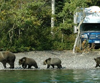 Bears near camper