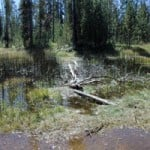 Treasures in Yellowstone's Backcountry