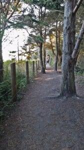 Bluff walk through the trees.