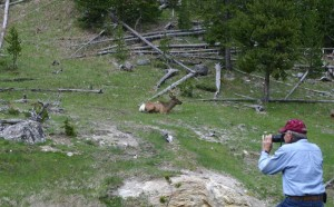 Lee Photographing a Resting Elk