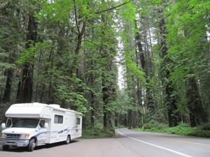 RV in redwoods