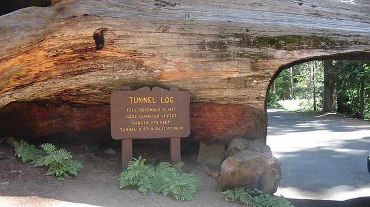 Sequoia-Tunnel-log