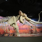 Tour the Nevada State Museum While in Carson City