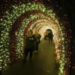 Celebrate Christmas at the Oregon Garden